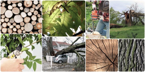 Tree Care Tips and Home Safety